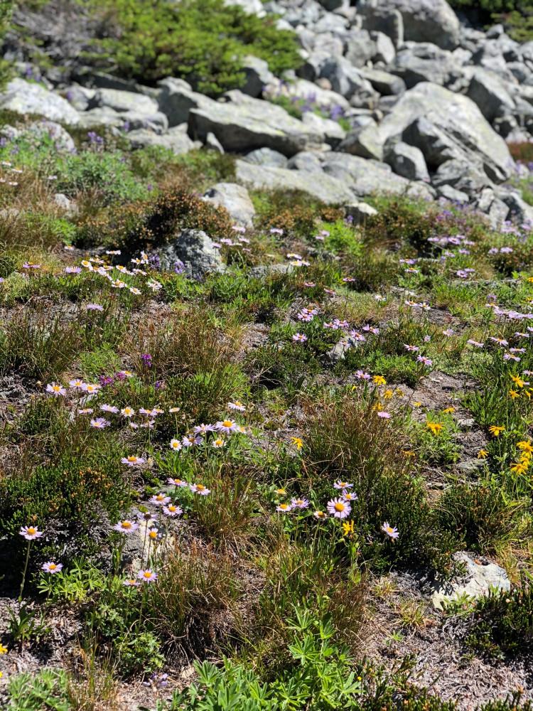 Впервые увидала альпийские луга. Почему-то у меня было уже осеннее настроение, а тууут! Все цветёт! Свежие краски и запахи!