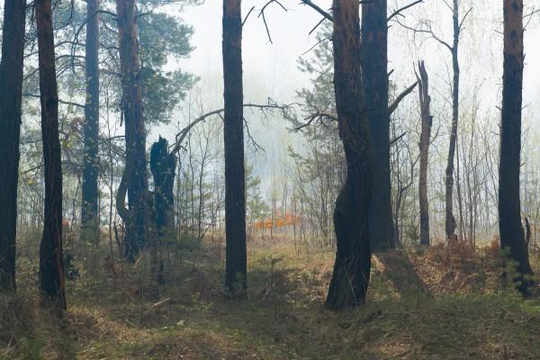 Лесной пожар-1
