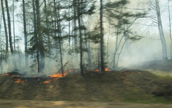 Лесной пожар-3