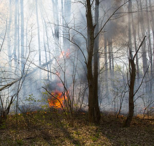 Лесной пожар-4