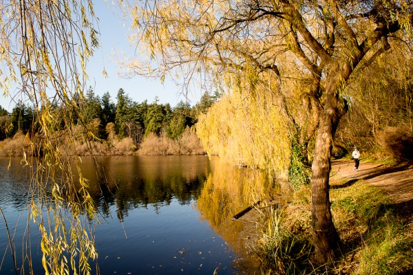 Lost Lagoon 27.11.15-4