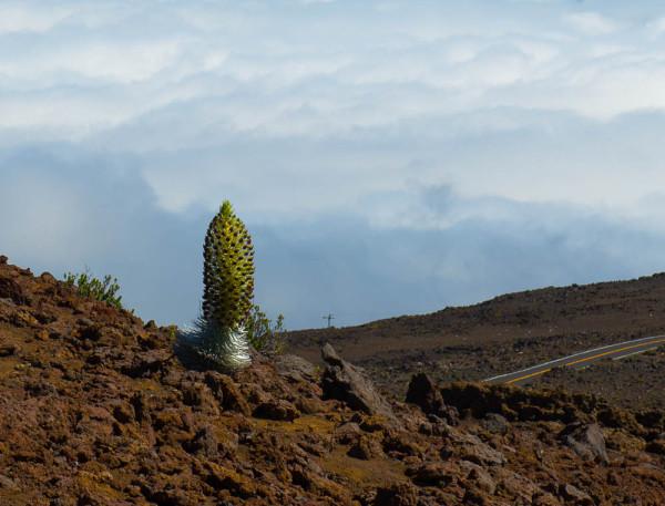 Maui 20.04.16  Post-7