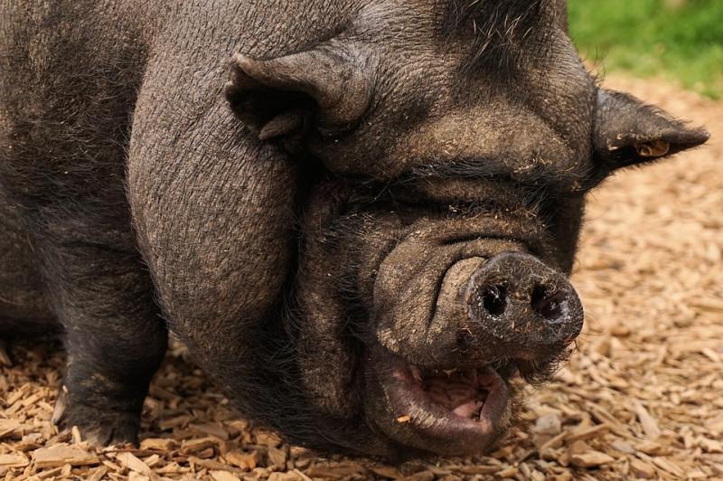 Ни одна свинья не заикнулась о повышении з/п медикам