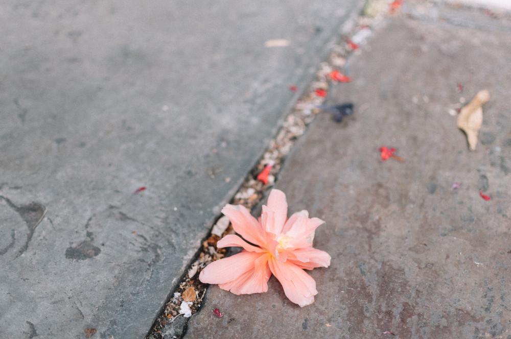 Лондон, улица, цветок