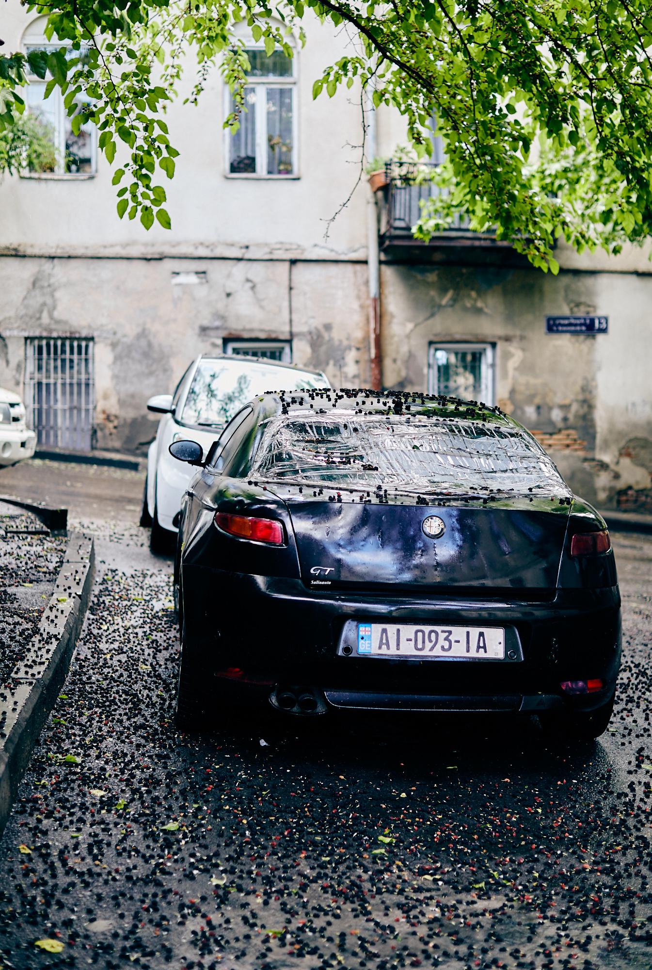 Шелковица после дождя