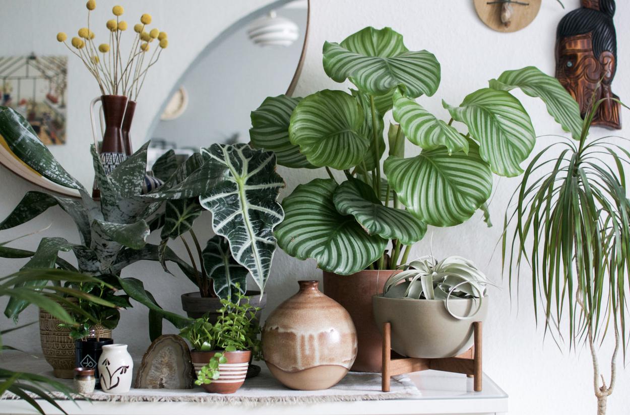 Фото из книги Urban Jungle: Как создать уютный интерьер с помощью растений