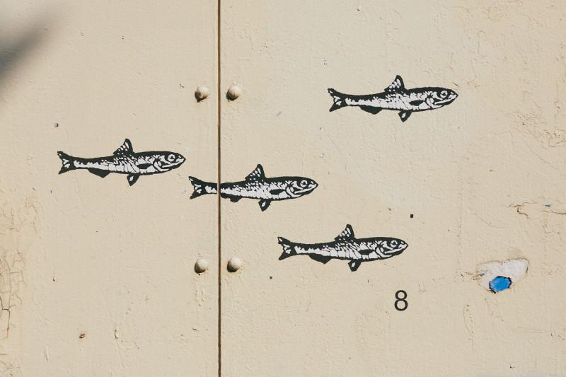 Рыбка тюлька водится в Волге