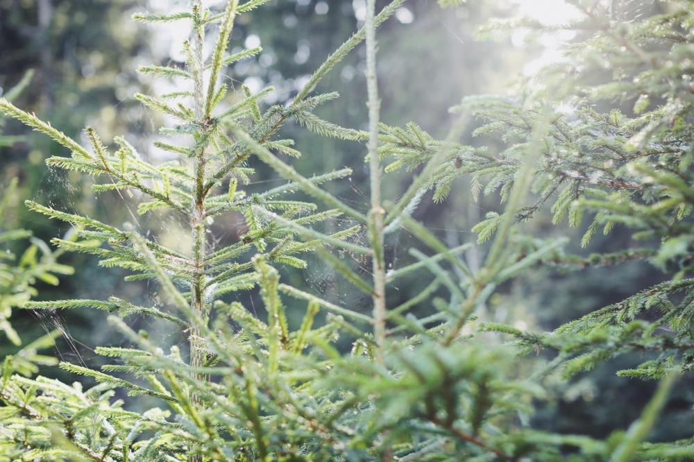 Выходной среди недели: брусника, вечерний свет в лесу и селфи в розовом