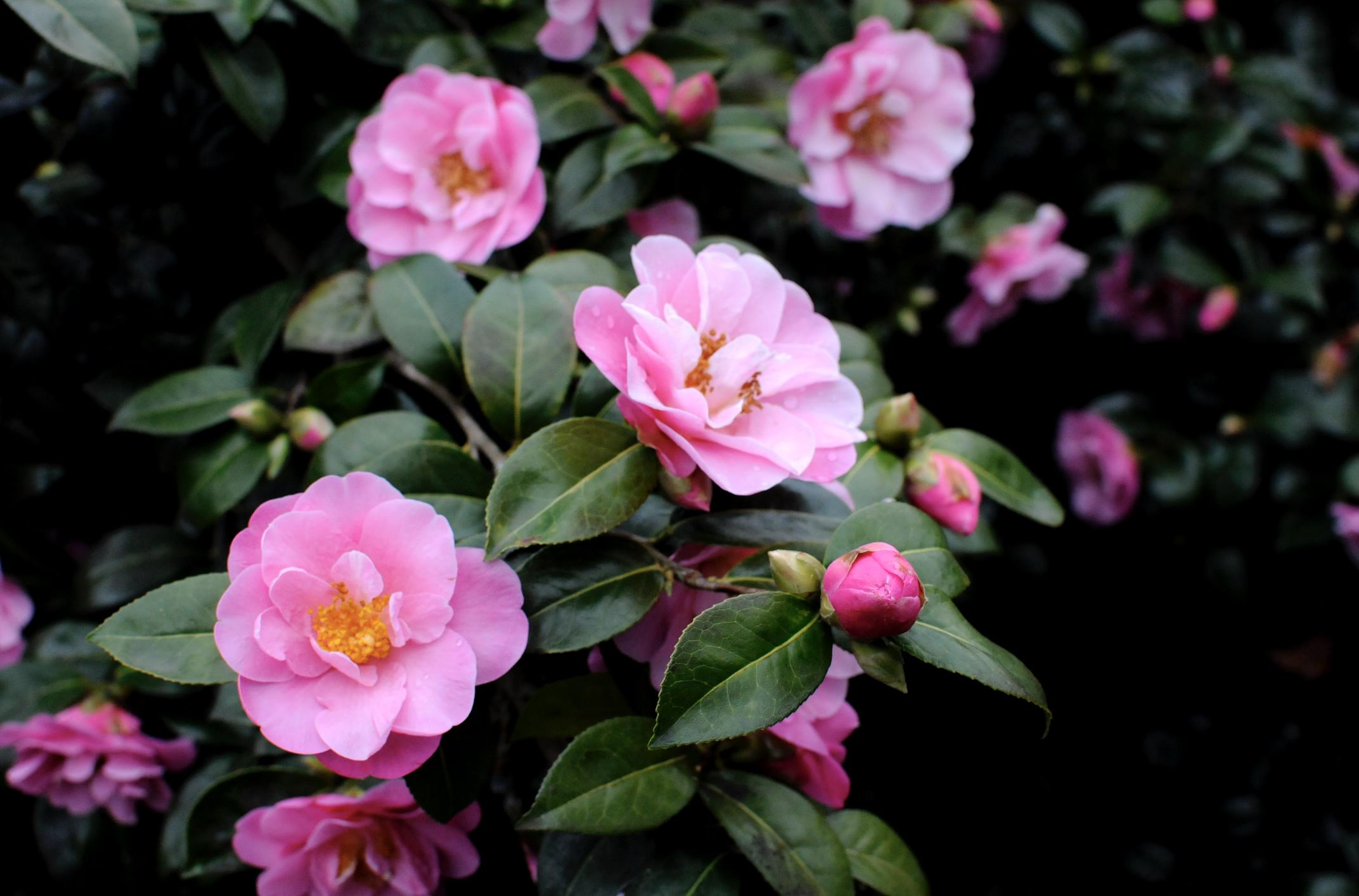 Лондон, Гринвич, цветы из секретного сада