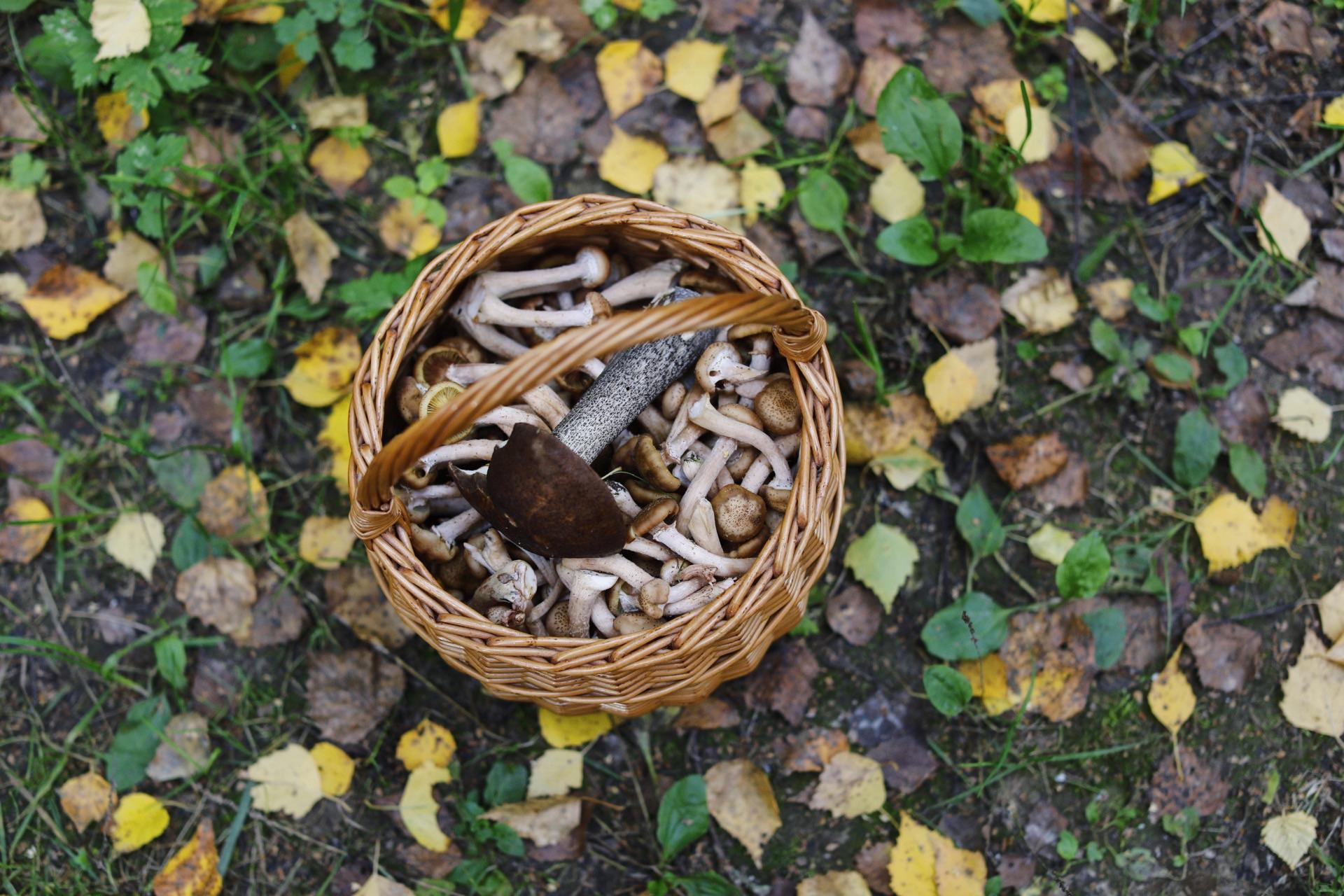 Съедобные грибы :)