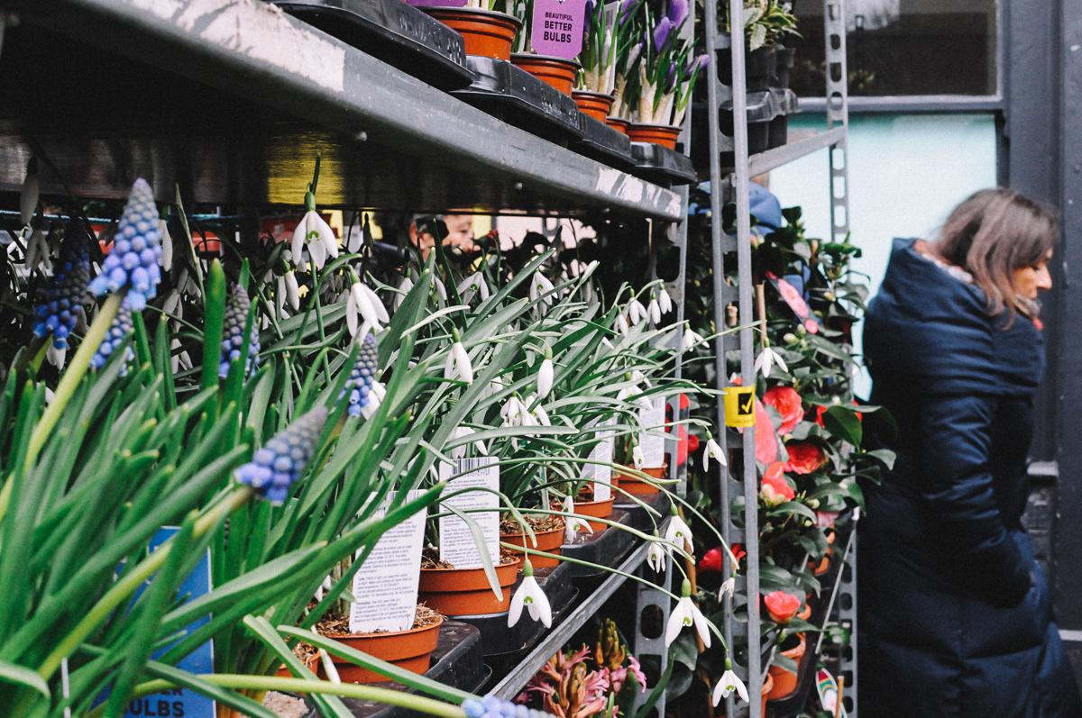 Фотография из поста про Columbia Road Flower Market