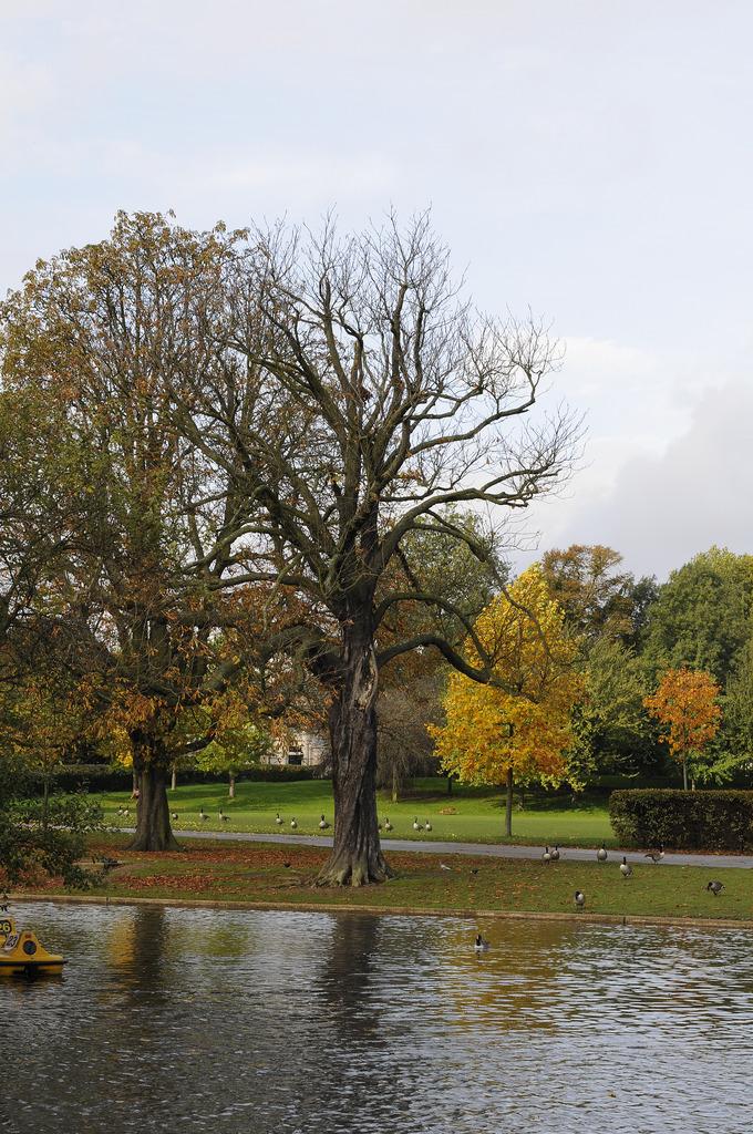 Regent's park. London