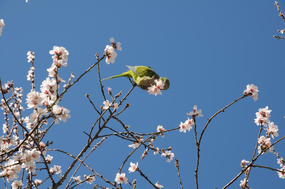И зеленый попугай