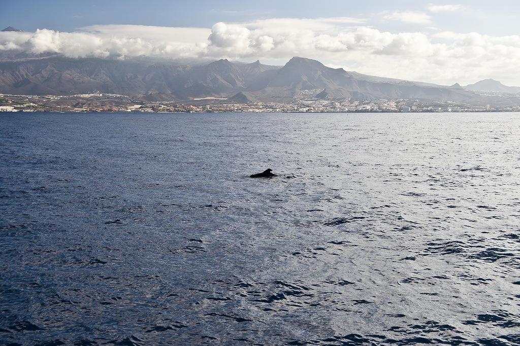 рыбалка, океан, тунец, голубой тунец, голубой