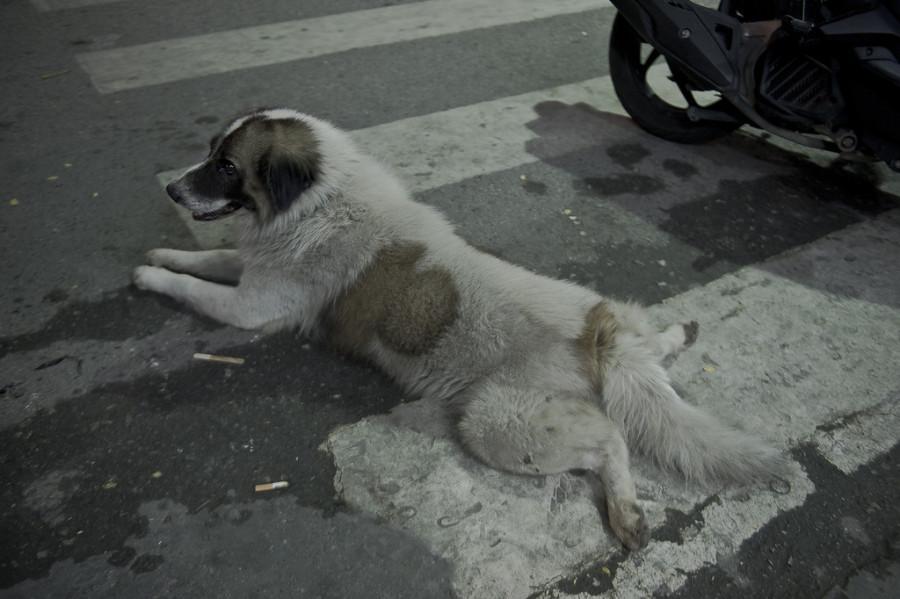 собака лежака