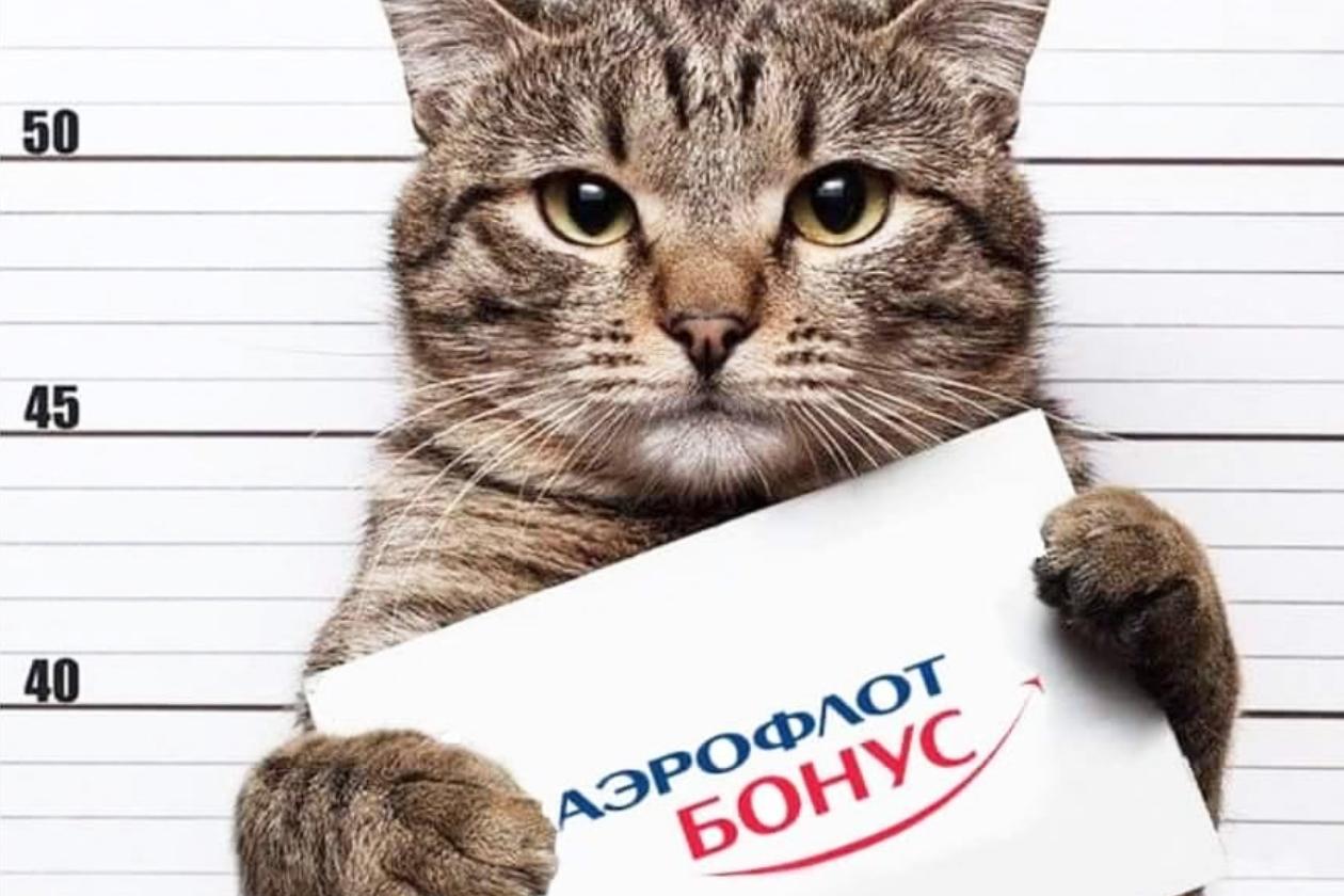 Толстый кот - Аэрофлот