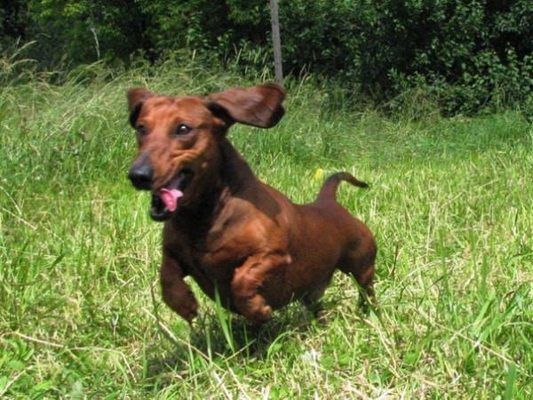 Собака - жертва догхантера