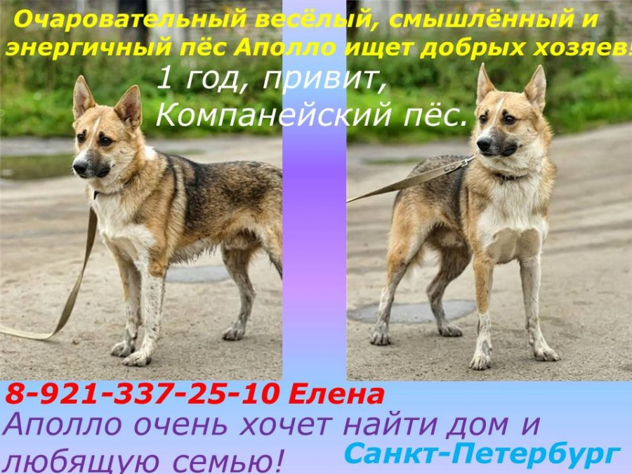 Аполло 22