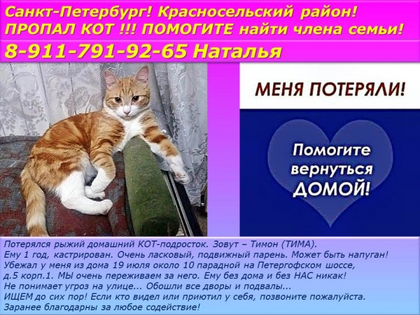 Санкт-Петербург! Красносельский район! ПРОПАЛ КОТ !!! ПОМОГИТЕ найти члена семьи!