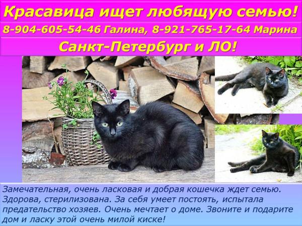 Санкт-Петербург! Очаровательные кошечки ищут любящих хозяев!