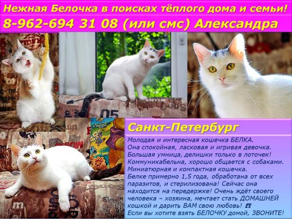 Санкт-Петербург! Нежная Белочка в поиске теплого дома и семьи!
