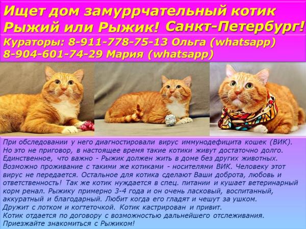 Санкт-Петербург! Ищет дом замуррчательный котик Рыжий или Рыжик!