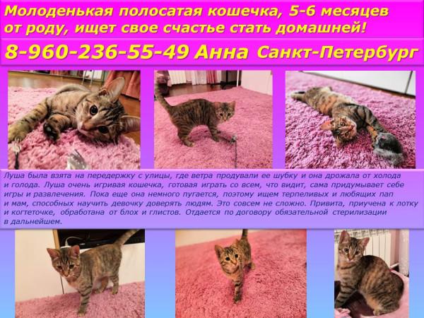 Санкт-Петербург!Молоденькая полосатая кошечка,5-6 месяцев от роду,ищет свое счастье стать домашней!