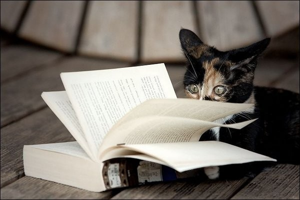 reading-cats-03