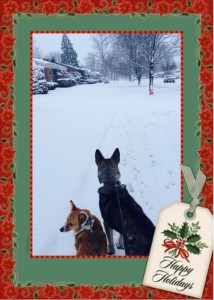 holiday2016dogz.jpg