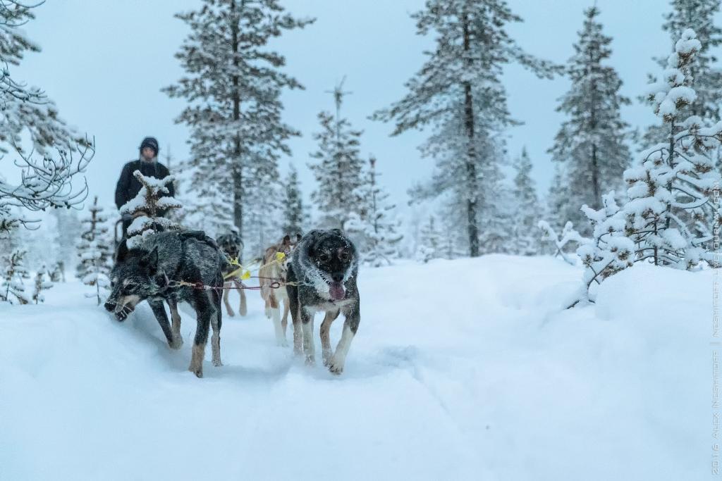 2016-Lapland-000035-Edit.jpg
