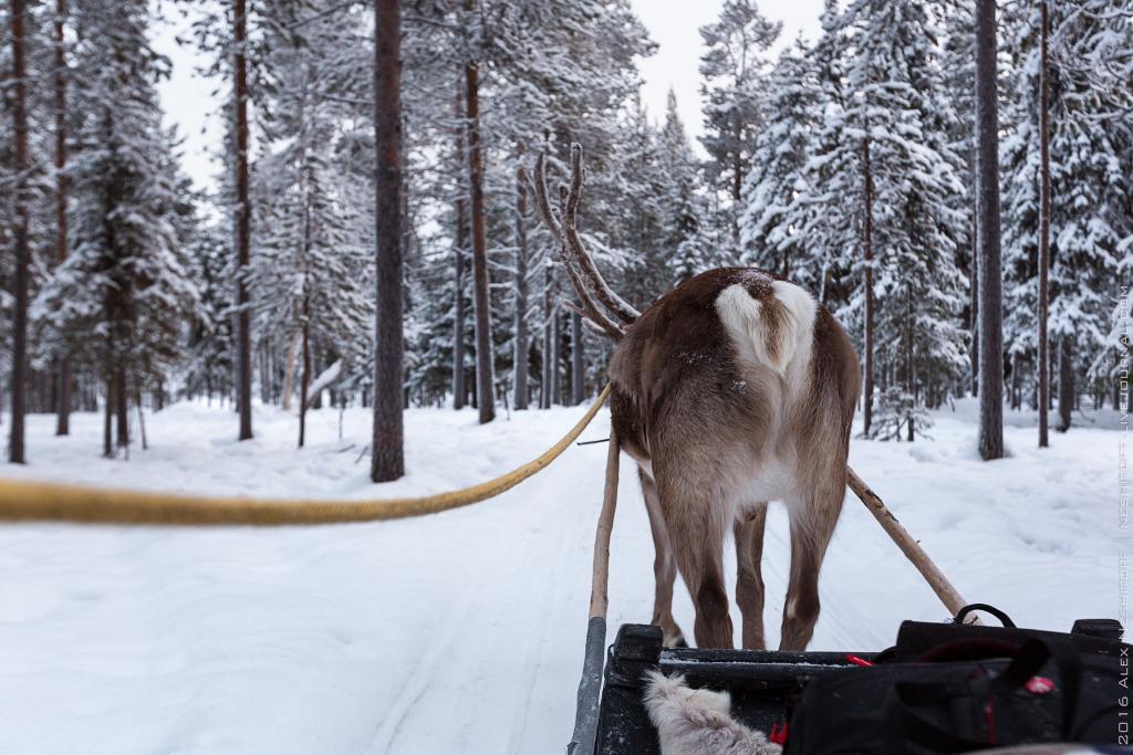 2016-Lapland-001321-Edit.jpg