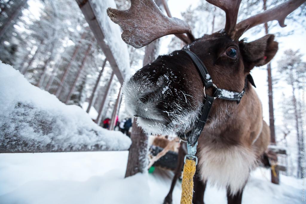 2016-Lapland-001513-Edit.jpg