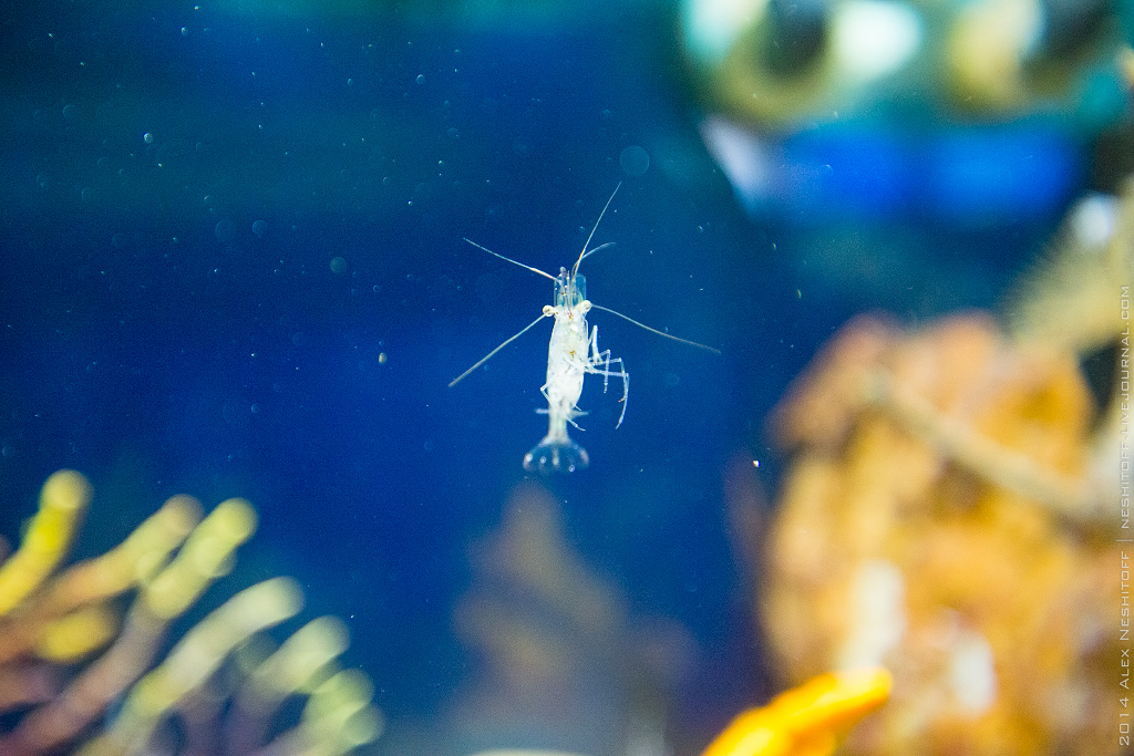 2014-Spain-Barcelona-Aquarium-004