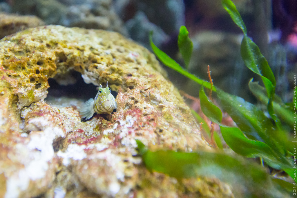 2014-Spain-Barcelona-Aquarium-011