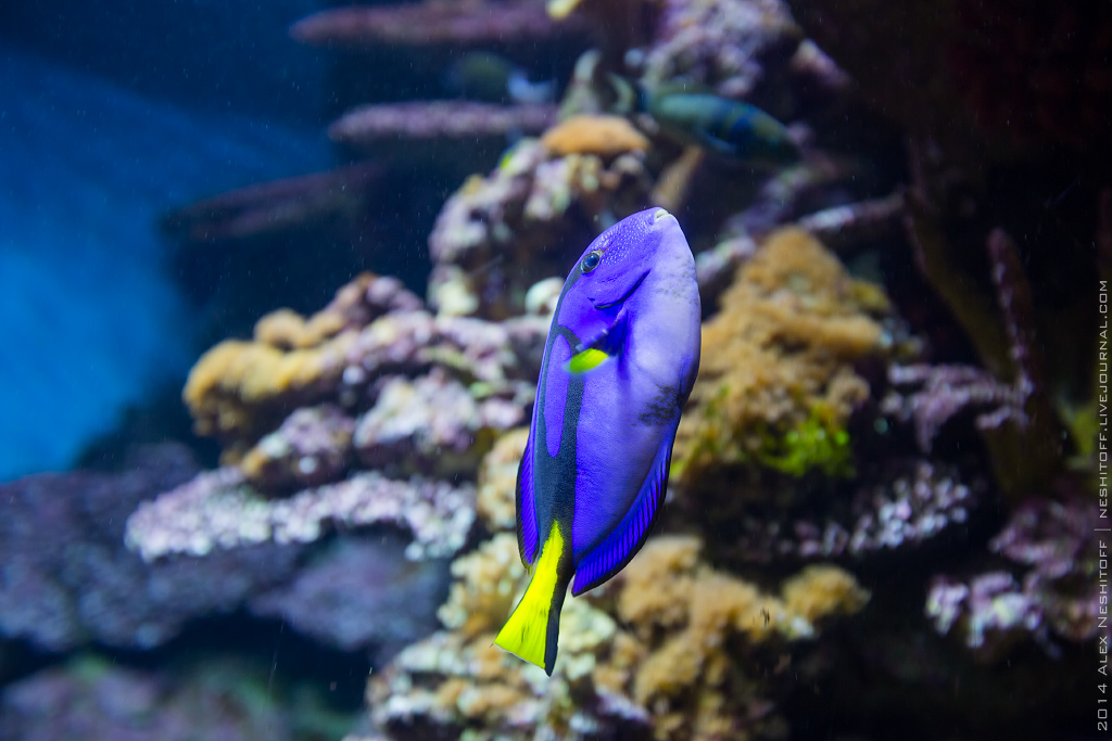 2014-Spain-Barcelona-Aquarium-013