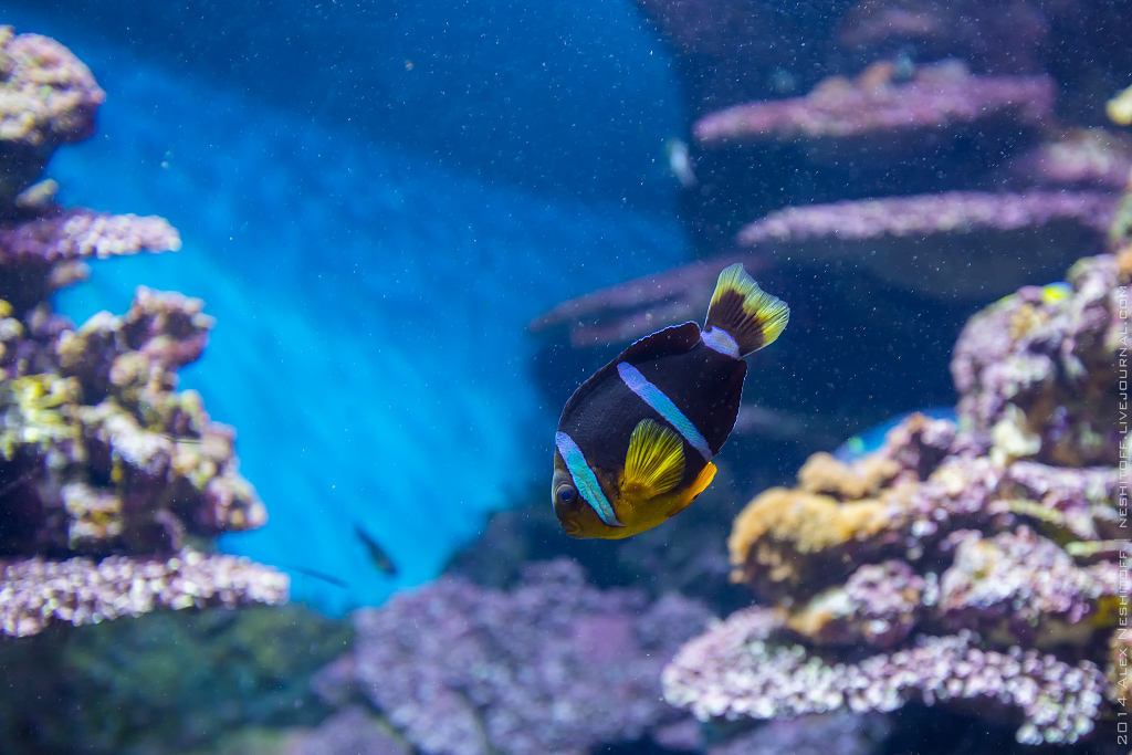 2014-Spain-Barcelona-Aquarium-014