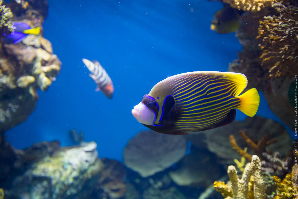 2014-Spain-Barcelona-Aquarium-016