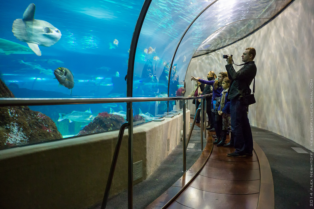 2014-Spain-Barcelona-Aquarium-019
