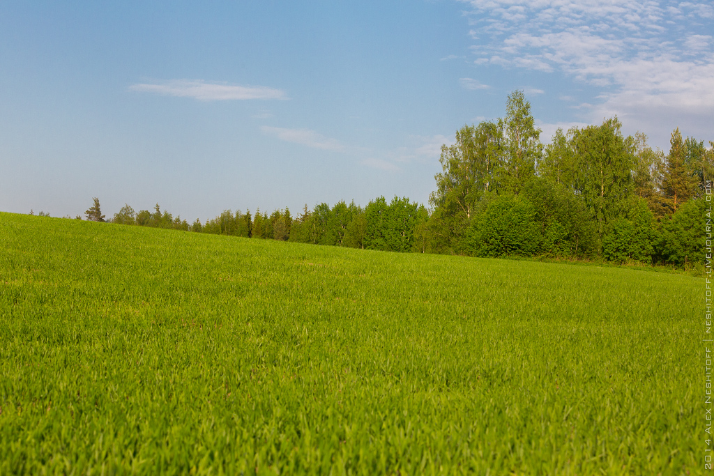 2014-Finland-Field of South-Summer-013