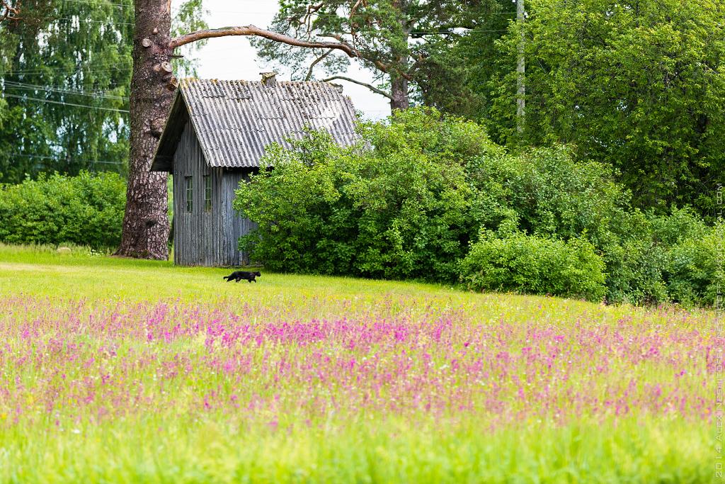 2014-Latvia-Pastoral-016