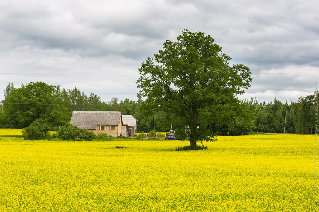 2014-Latvia-Pastoral-017