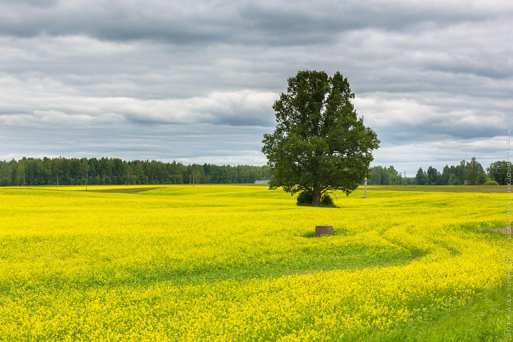 2014-Latvia-Pastoral-018