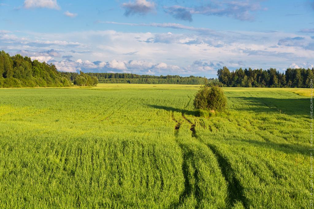 2014-Latvia-Pastoral-007