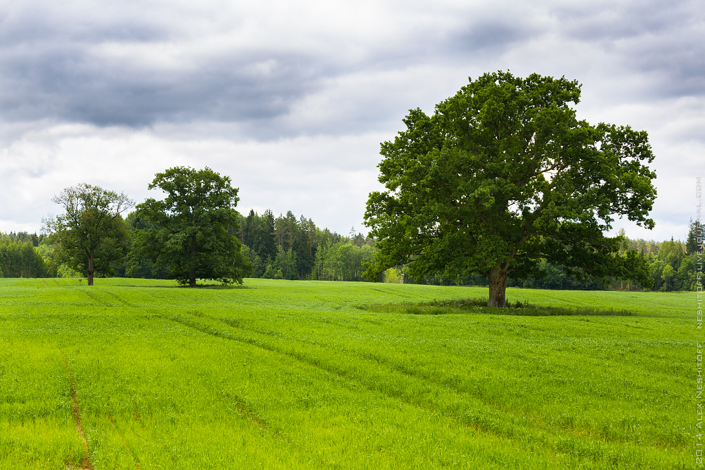 2014-Latvia-Pastoral-010