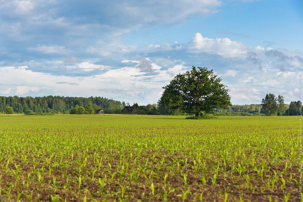 2014-Latvia-Pastoral-004