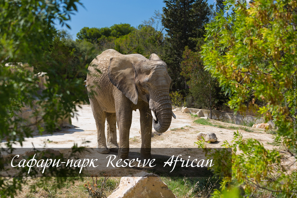 2014-France-Reserve-African-Animals-title