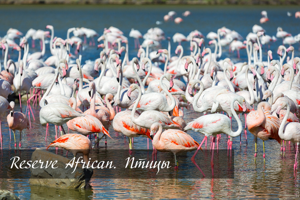 2014-France-Reserve-African-Birds-title