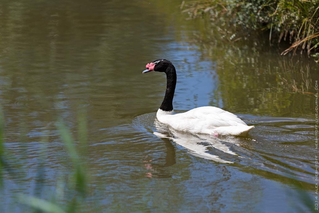 2014-France-Reserve African-Birds-002