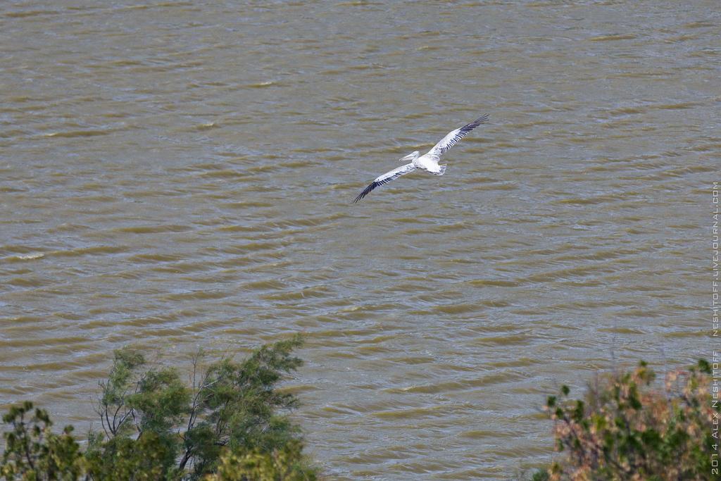 2014-France-Reserve African-Birds-003