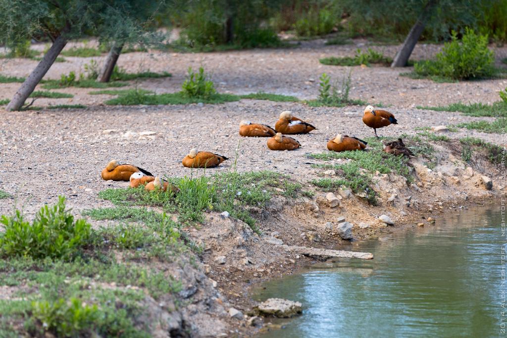 2014-France-Reserve African-Birds-005
